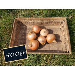 Oignon jaune 500